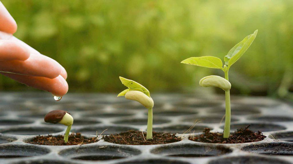 3 I For Spiritual Growth Letting The Sacred Seed Grow